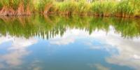 新疆玛纳斯县国家湿地公园郁郁青青 沙鸥翔集(图) - 人民网