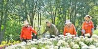 乌鲁木齐市植物园第二十二届菊花展将开幕 - 市政府